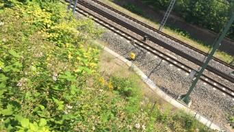 Bahnlärmschutz| Moderner Bahnverkehr sieht anders aus.